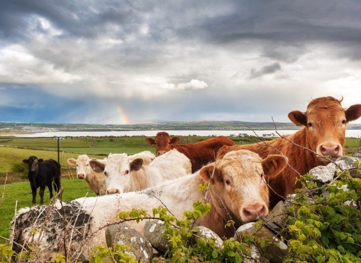 farm-ireland-shutterstock