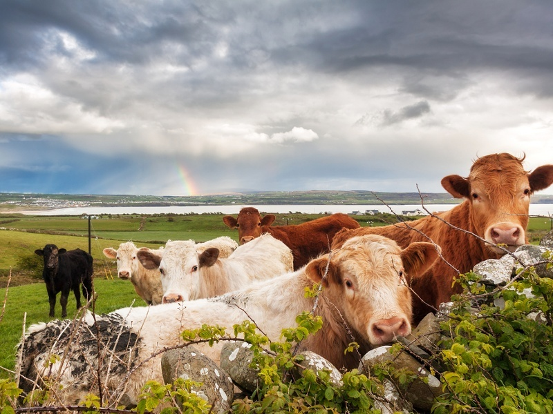 Ireland's smart agriculture future is on a fertile plain (video)