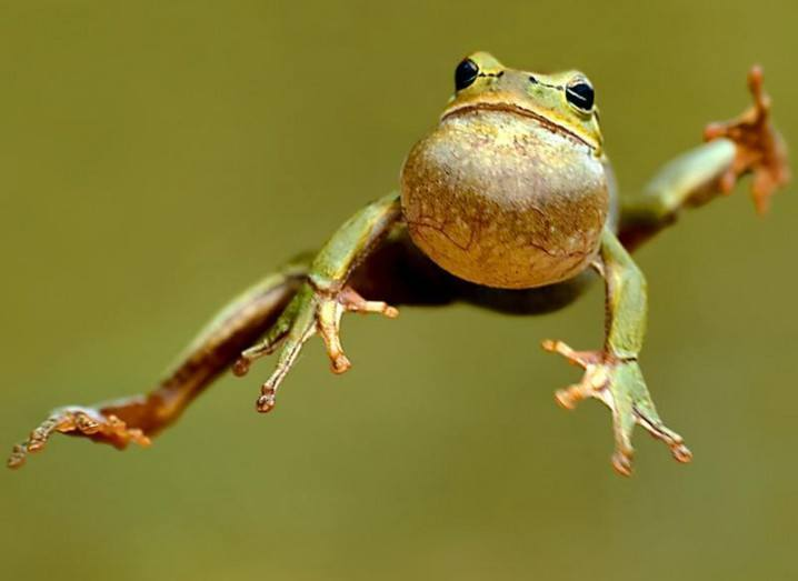 Frog leaping _ Frog Robot