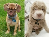 Earl the Grumpy Puppy or Tonkey Bear: choose your post Bank Holiday spirit animal