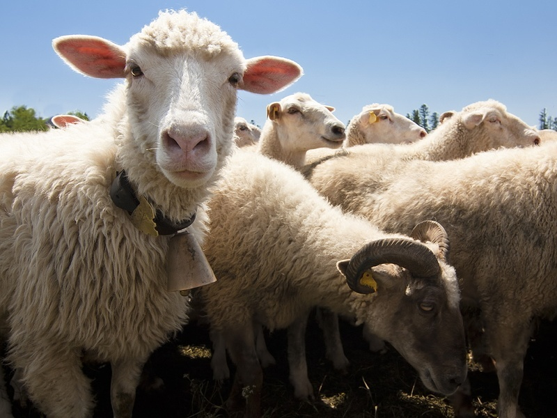 Google Sheep View: The website you didn't know you needed
