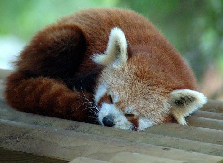 Firefox 40 - sleeping firefox