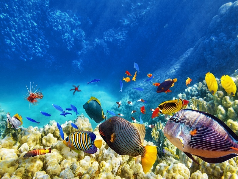 Research claims climate change to bring greater biodiversity to seas