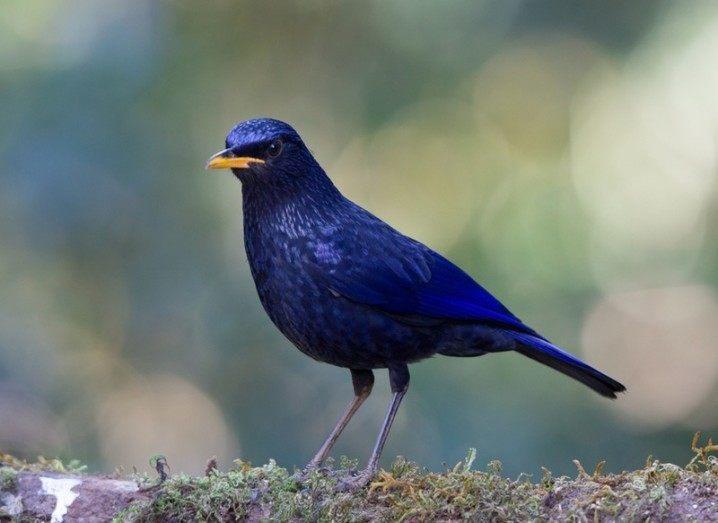 Fintech: Twitter-like blue bird
