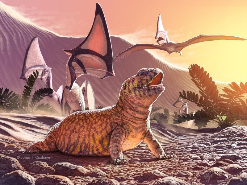 Mini T-Rex and chubby lizard discovered by palaeontologists