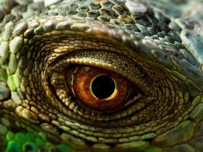 Now researchers can see through the eyes of animals