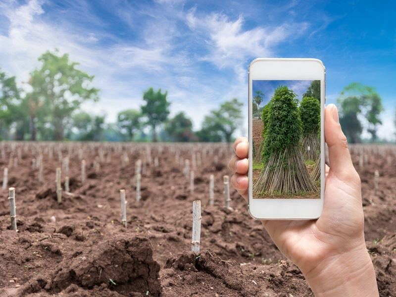 Europe's agriculture could be transformed by the internet of things