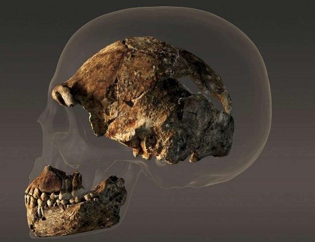 Homo naledi head