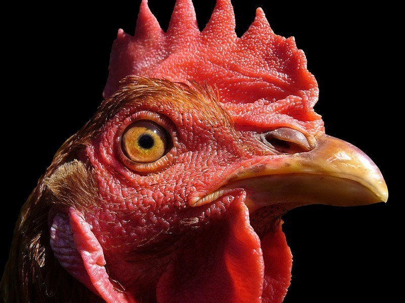 Ig Nobel Prize 2015: Chicken dinosaurs and 9 other winners