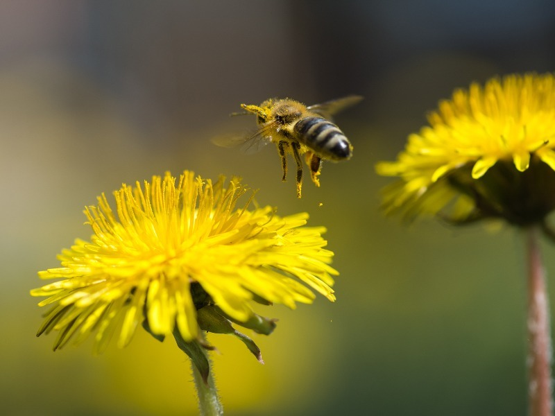 Ireland saving the bees! Plan to tackle pollinator decline