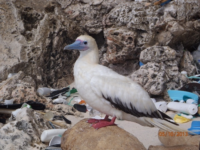 animals eating plastic
