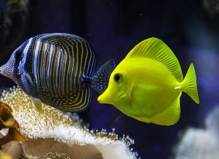Data buyouts: fish
