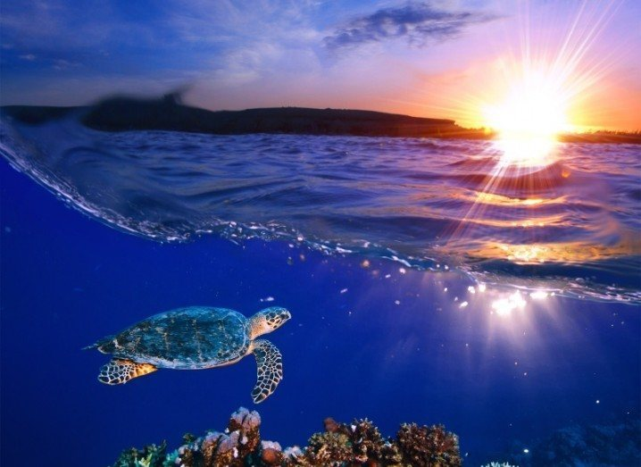Marine Reserve - Turtle Pacific
