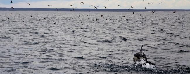 Marine Life dolphin seabirds