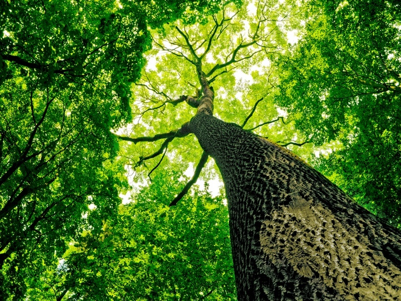 Open-source Tree of Life maps genesis of 2.3m species