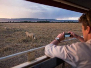 Wildebeest migration livestream Periscope