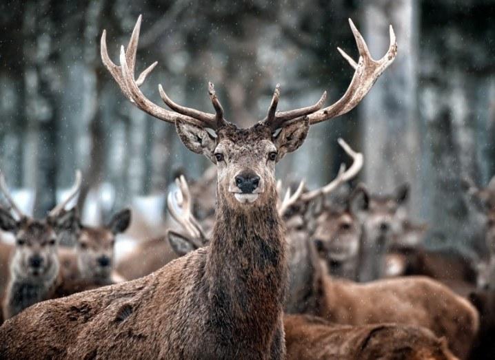 Deer | Animal poop environment