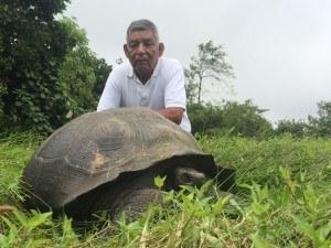New tortoise species