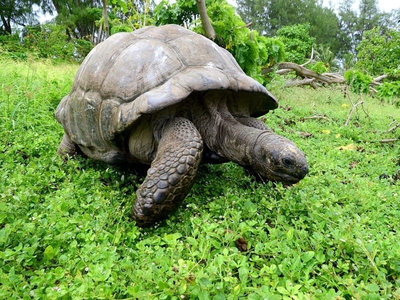 Scientists shell-shocked after finding new tortoise species on Galapagos Islands