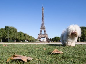 Paris Eiffell TOwer with a dog | Google Images