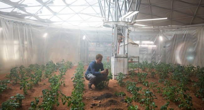 The Martian botany