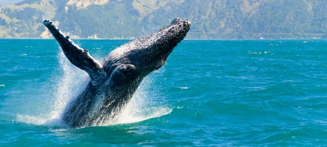 Whales | Animal poop environment