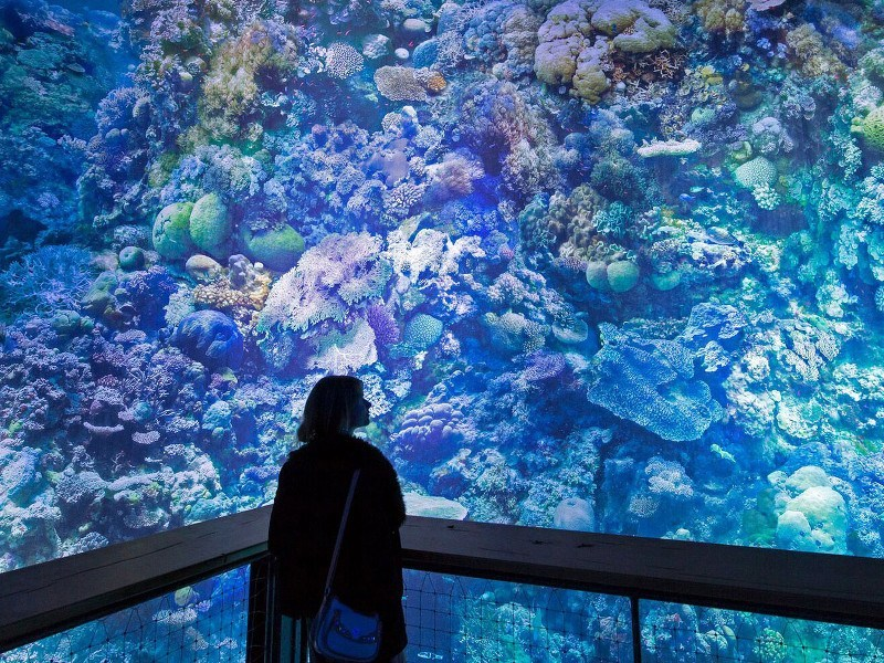 You can immerse yourself in the Great Barrier Reef, and stay dry, in Germany
