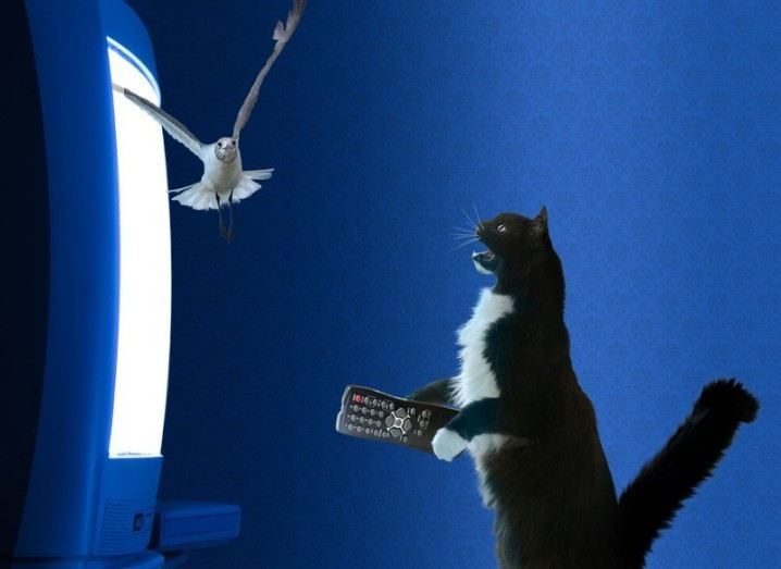 Twitter: cat and bird fight