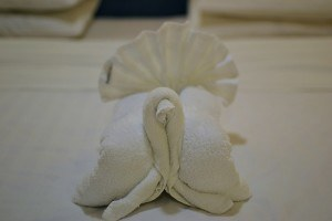 How to cook a turkey: towel turkey