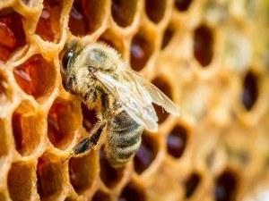 Bee die-off honeycomb