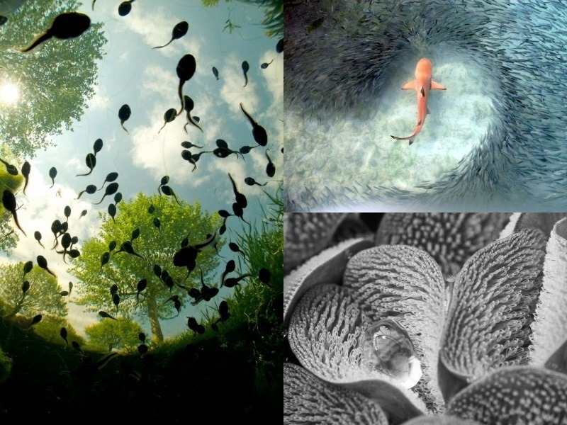 10 best nature photos of the year are out of this world