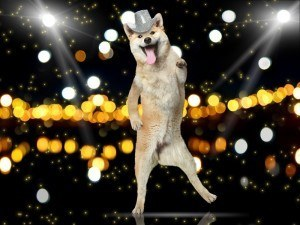 Dog partying | 1,345 jobs in Ireland announced by Apple, Swrve and Indeed