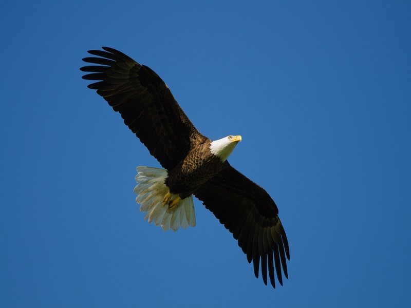 Mystery of how birds navigate solved, scientists flying high