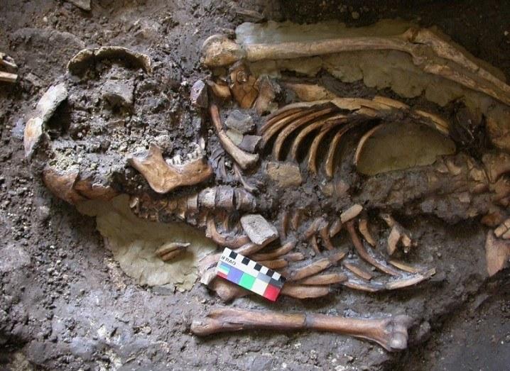 ancient European human