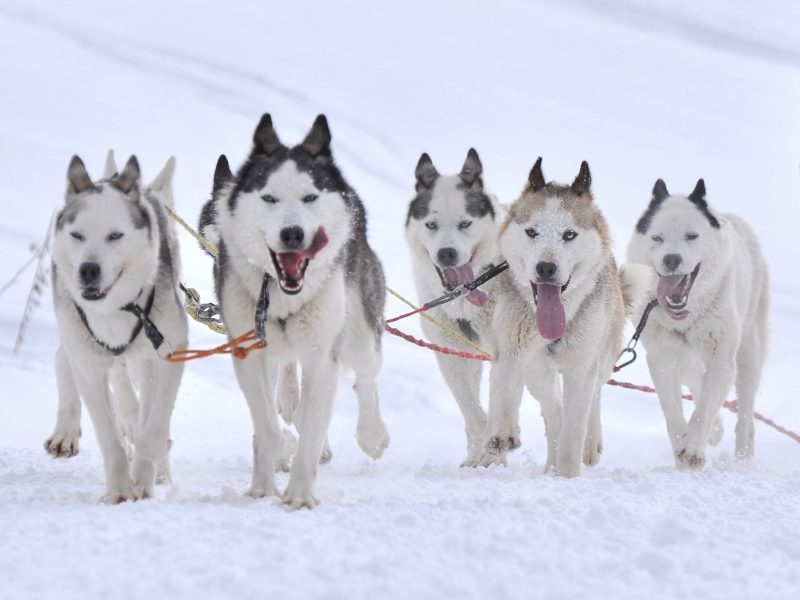 Is Dublin busy? Ask some huskies, of course (infographic)
