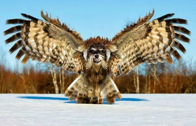 Hybrid Animals | Fierce Schnowlzer