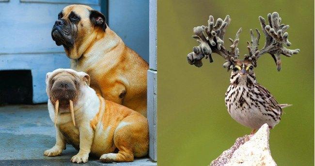 Hybrid Animals  |