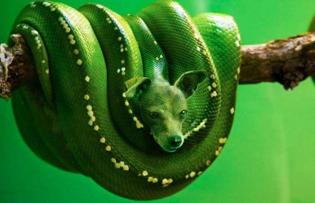 Hybrid Animals | The Green Bark Python