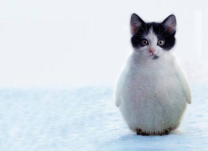 Hybrid Animals | Penguitten