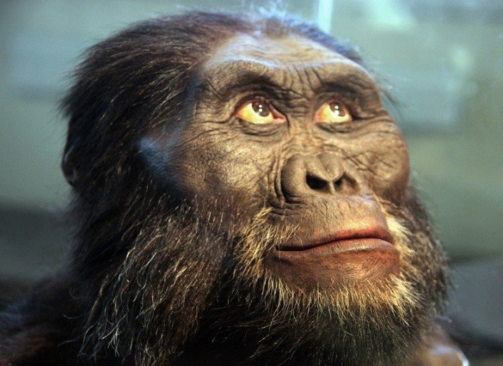 Who is Lucy the Australopithecus Google Doodle