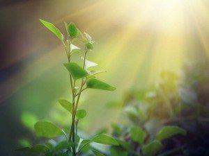Photosynthesis replication: sun shining on plants