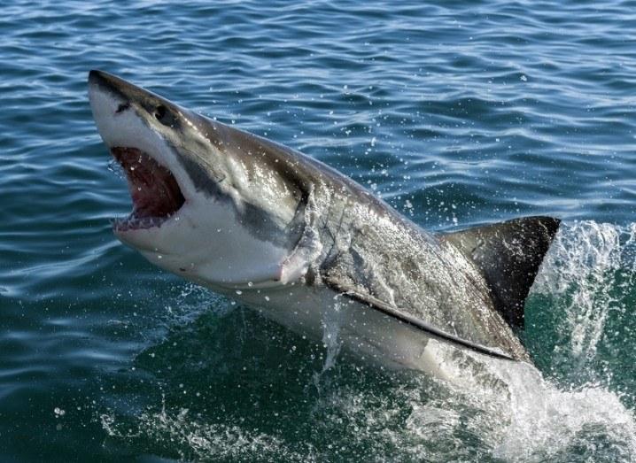 Shark | Sharks