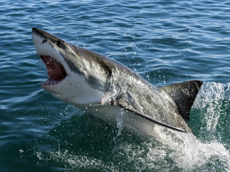 Australia takes the smart approach to monitor sharks