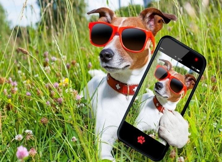 Snapchat dog selfie