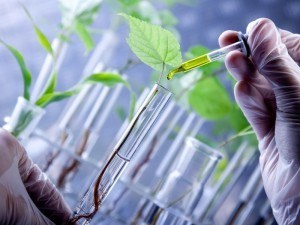Biotechnology plants in test tubes