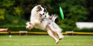 Dog frisbee | Artificial intelligence image recognition