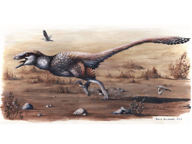 Dakotaraptor, much bigger than a Velociraptor, was 'utterly lethal'