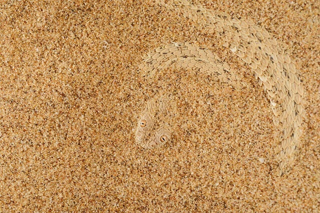 Sand has scales
