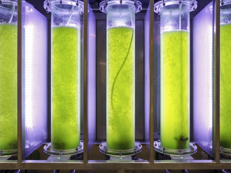 Biobased SMEs in north Europe backed to tune of €70m