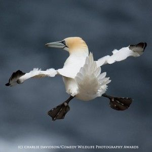 Funny animal photos bird